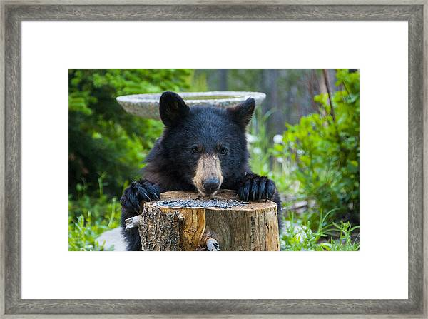 The Cub That Came For Lunch 7 Framed Print