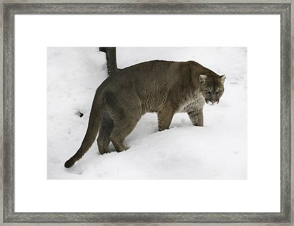 The Look Framed Print by David Barker