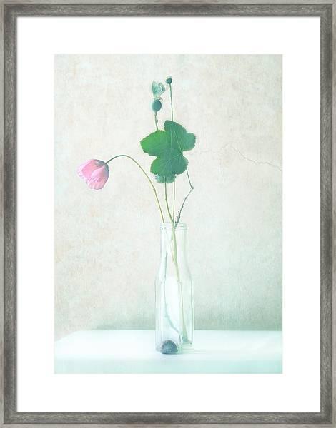 The Pink Flower Framed Print