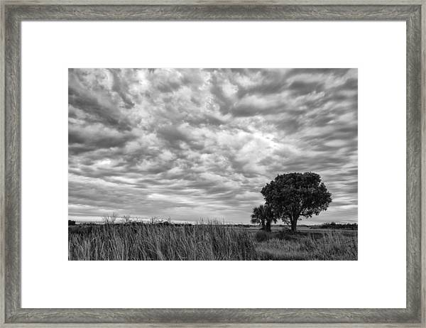 The Right Tree Framed Print
