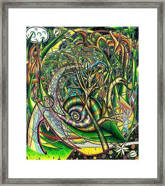 The Snail Framed Print