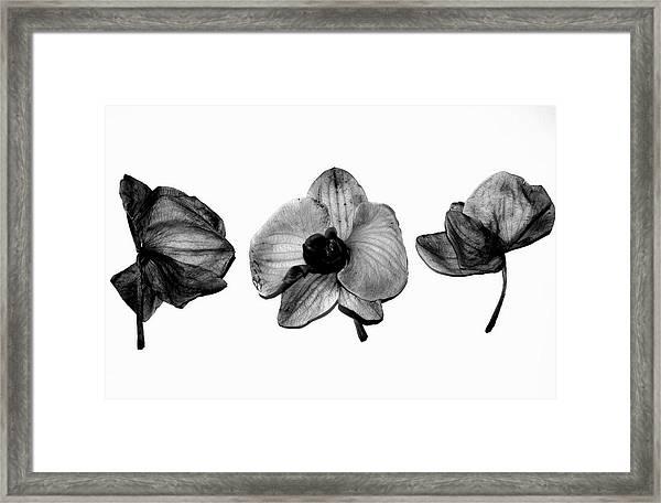 Three Beauties Framed Print