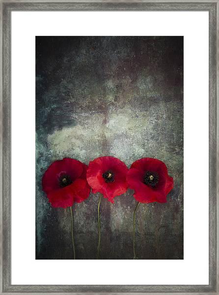 Three Poppies Framed Print