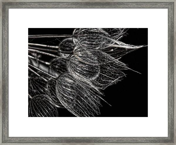 Silver Flowers Framed Print