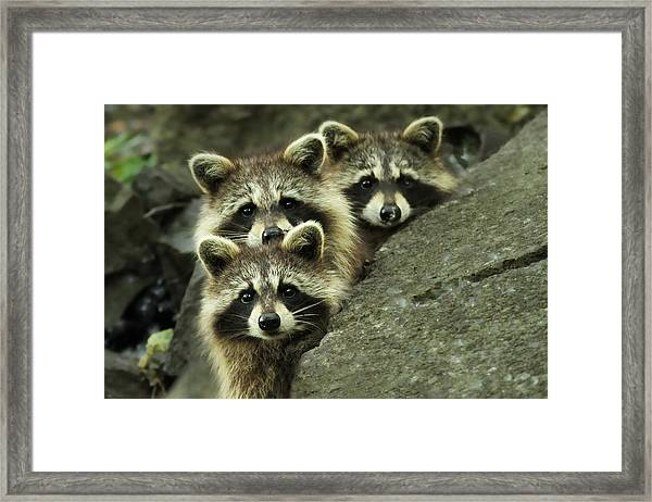 Tres Banditos Framed Print