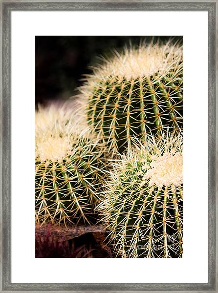 Triple Cactus Framed Print