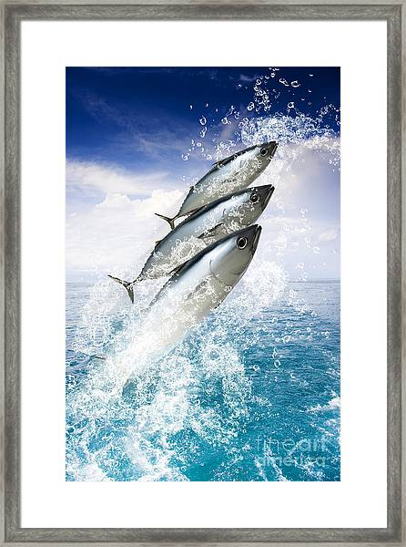 Tropical Sea Escape Framed Print