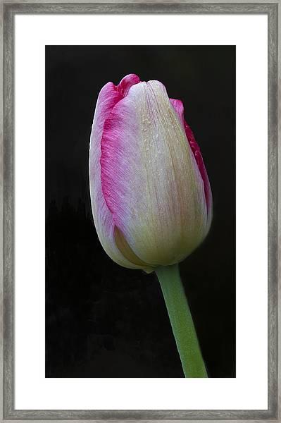 Tulip Bright Framed Print