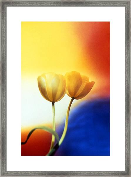 Tulips  Framed Print by Etti PALITZ