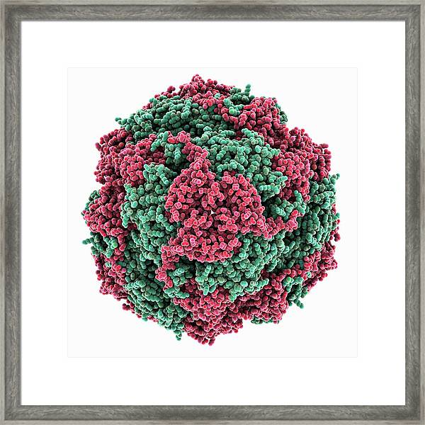 Urease Framed Print