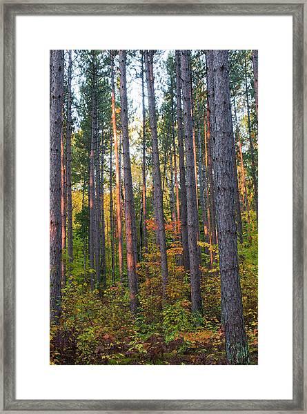 Usa, Minnesota, Lake Itasca, Itasca Framed Print