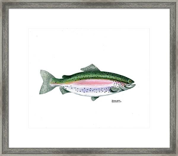Wallace Brantley Sport Fishing Series Rainbow Trout Framed Print