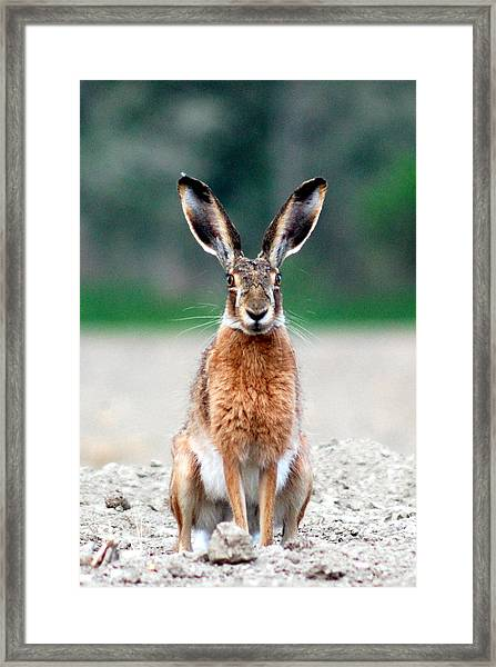 Watching You Framed Print by Peter Kallai