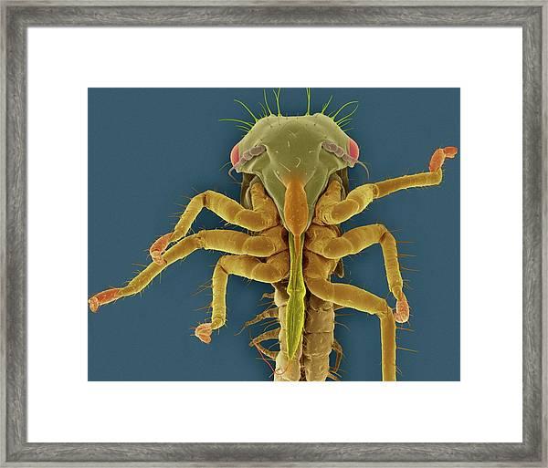 White Apple Leafhopper Nymph Framed Print
