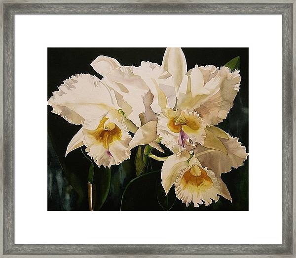 White Cattleya Orchids Framed Print