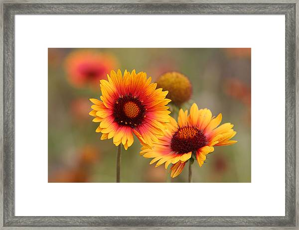 Wildflowers Framed Print by Darryl Wilkinson