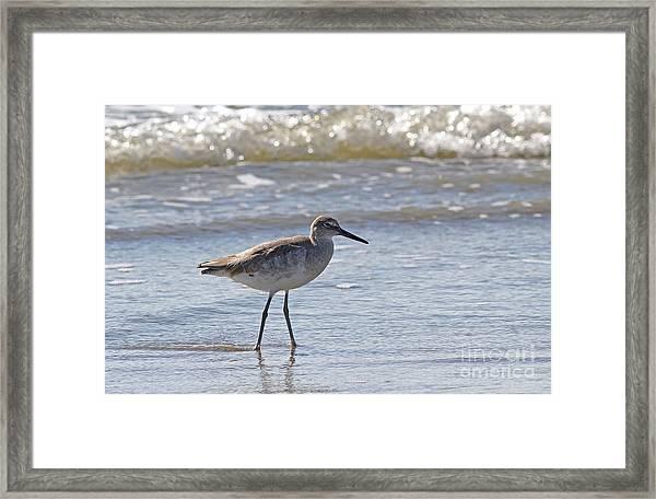 Willet Bird Wading In Ocean Surf Framed Print