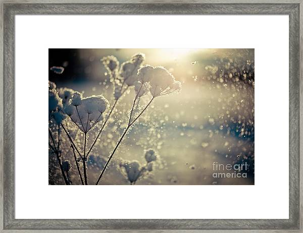 Framed Print featuring the photograph  Snow Covered Branch And Snow Fall Artmif by Raimond Klavins