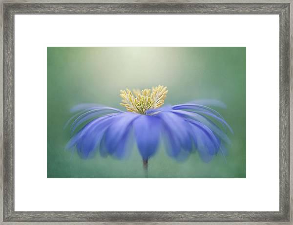 Winter Windflower Framed Print by Jacky Parker