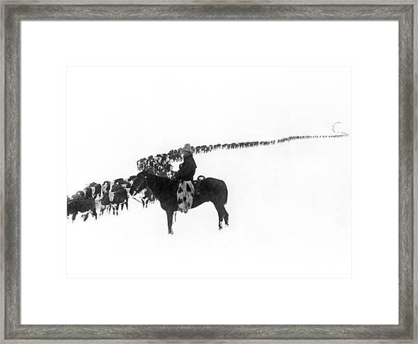 Wintertime Cattle Drive Framed Print