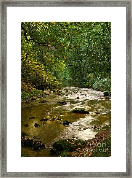 Woodland Stream In Autumn Framed Print