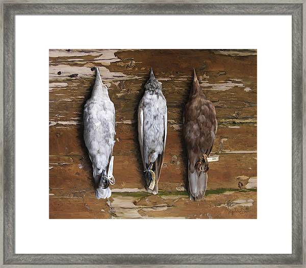 10. 3 Crows Framed Print