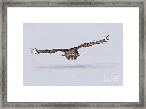 Great Gray Owl Framed Print