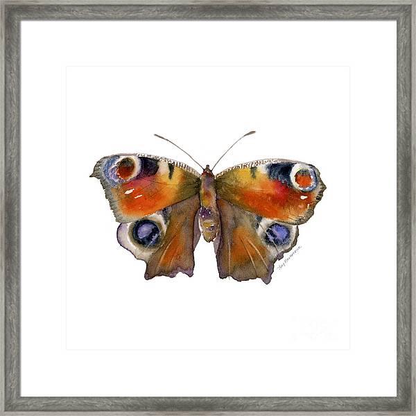 10 Peacock Butterfly Framed Print