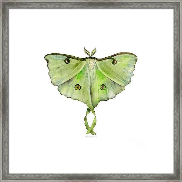 100 Luna Moth Framed Print