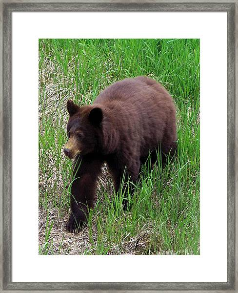 100414 Black Bear Framed Print