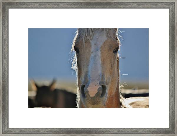 108 Framed Print by Wynema Ranch