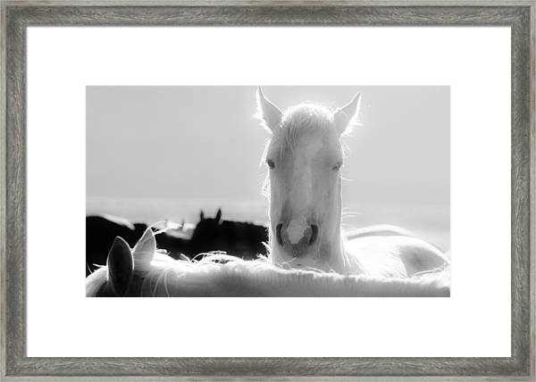 109 Framed Print by Wynema Ranch