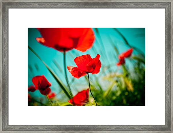Framed Print featuring the photograph Poppy Field And Sky by Raimond Klavins