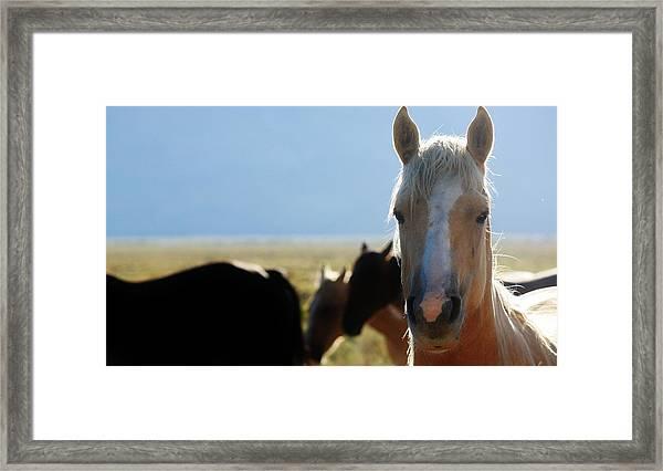 110 Framed Print by Wynema Ranch