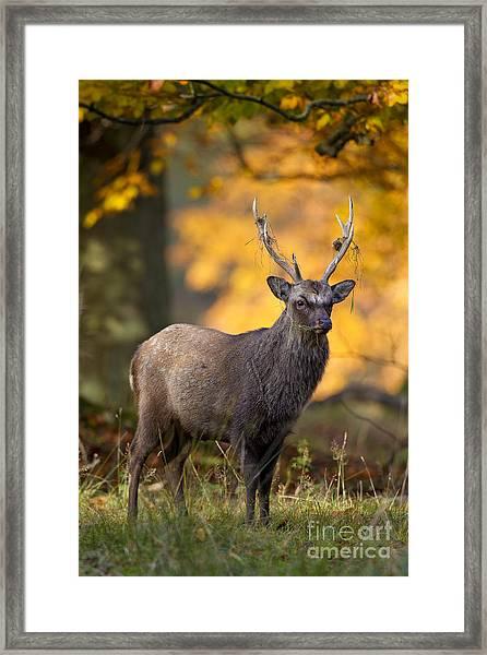 110307p073 Framed Print