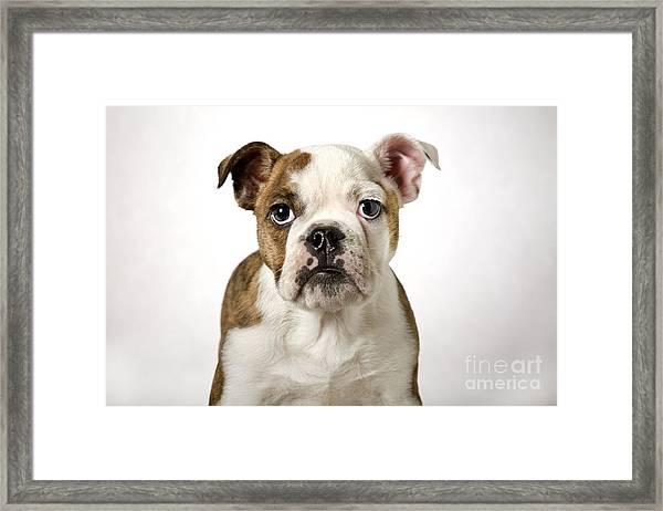110307p153 Framed Print