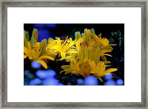 110618_013 Framed Print