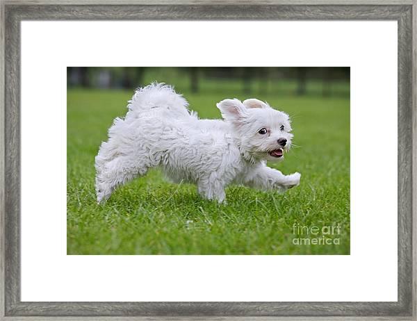 110801p130 Framed Print