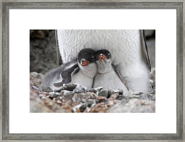 111130p166 Framed Print