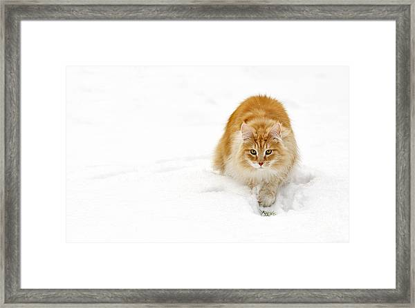 111230p310 Framed Print