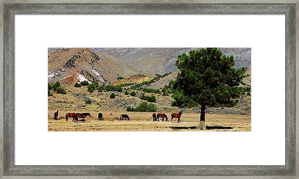 112 Framed Print by Wynema Ranch