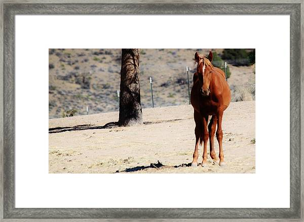 113 Framed Print by Wynema Ranch