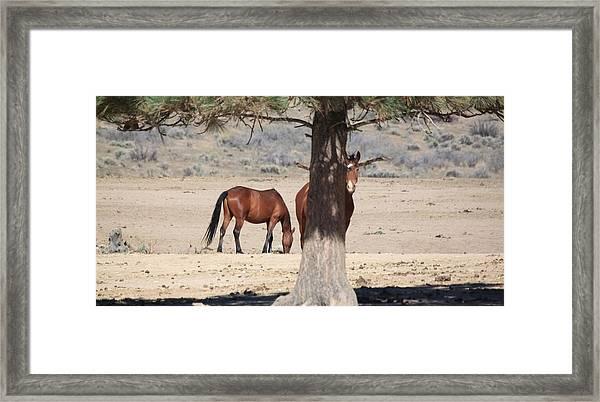 114 Framed Print by Wynema Ranch
