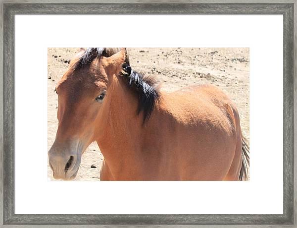 115 Framed Print by Wynema Ranch