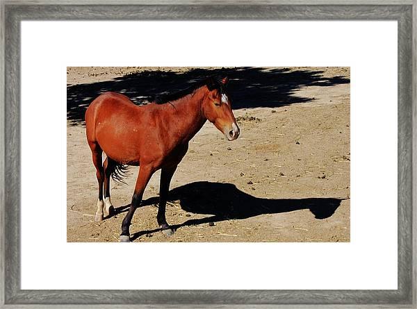 117 Framed Print by Wynema Ranch