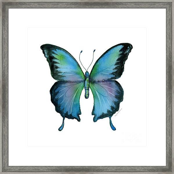 12 Blue Emperor Butterfly Framed Print
