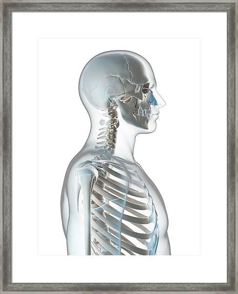 Human Skull And Neck Framed Print by Sebastian Kaulitzki