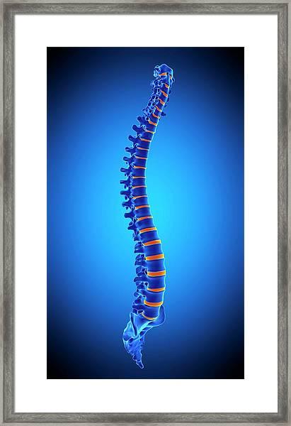 Human Spine Framed Print by Sebastian Kaulitzki/science Photo Library