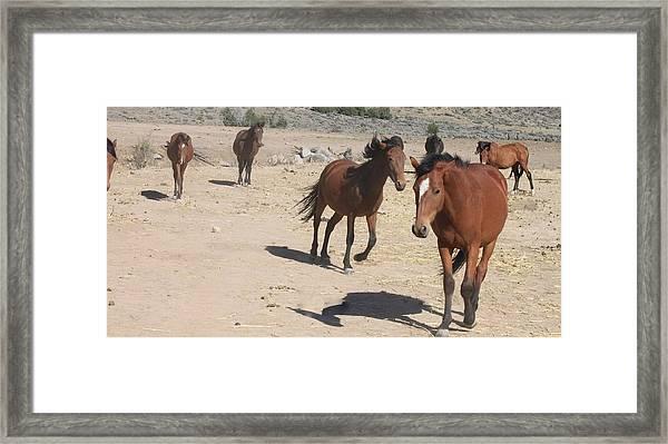 120 Framed Print by Wynema Ranch
