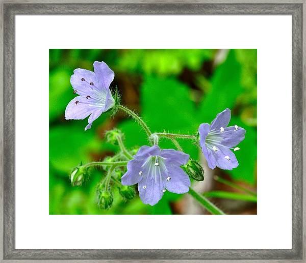 120427_143 Framed Print